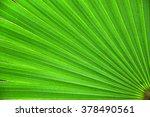 green palm leaf closeup... | Shutterstock . vector #378490561