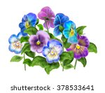 Pansy  Colored Violet Viola...