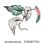 Garden Coleus Plant Watercolor...