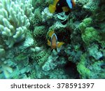 clown fish on a coral head on...   Shutterstock . vector #378591397