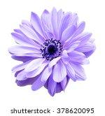 Purple Mona Lisa Blush Flower...