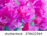pink bougainvillea  paper... | Shutterstock . vector #378622564