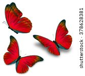 Beautiful Three Red Butterfly...