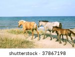 Wild Horses On The Beach....