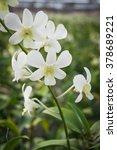 beautiful write orchid flowers   Shutterstock . vector #378689221