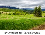 mountain summer landscape. pine trees near meadow and forest on hillside under  sky with clouds - stock photo
