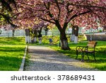 bench on the pavement in the park on a background of grass and sakura tree - stock photo
