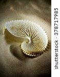 Sea Shells Seashells  Sea...