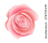 pink rose isolated on white... | Shutterstock .eps vector #378759199