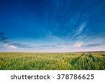 green wheat field in spring... | Shutterstock . vector #378786625