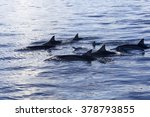 dolphins at black river ... | Shutterstock . vector #378793855