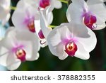 white and pink phalaenopsis... | Shutterstock . vector #378882355