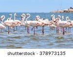 flamingo | Shutterstock . vector #378973135