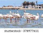 flamingo | Shutterstock . vector #378977611