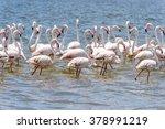 flamingo in the ocean | Shutterstock . vector #378991219