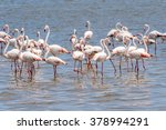 flamingo in the ocean | Shutterstock . vector #378994291