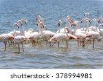 flamingo in the ocean | Shutterstock . vector #378994981