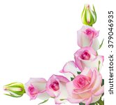 Stock photo beautiful pink rose rose with leaves isolated on white 379046935
