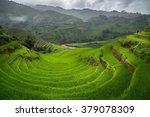 Green Rice Fields On Terraced...