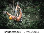 Man Zipline Flight In Jungle