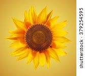 realistic sunflower isolated on ... | Shutterstock .eps vector #379254595