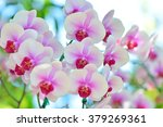 white and pink phalaenopsis... | Shutterstock . vector #379269361