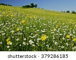 Flower Meadow With Meadow...