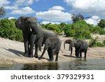 Small photo of African Elephants, (Loxodonta africana), Chobe National Park, Botswana, Africa