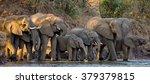 group of elephants standing...   Shutterstock . vector #379379815
