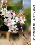 Small photo of Right in the frame the branches of an almond tree, on a one flower sits a painted lady butterfly, the background is blurred. Almond tree branches and butterfly. Close. Vertical. Daylight.