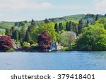 Trees From Lake Windermere