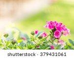 Beautiful Pink Hedge Flower ...