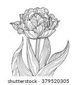 tulip flower  forest plant line ...