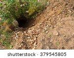 badger sett in the ground | Shutterstock . vector #379545805