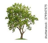 isolated neem tree on white... | Shutterstock . vector #379547575