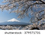 mt.fuji with cherry blossom at... | Shutterstock . vector #379571731