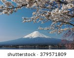 mt.fuji with cherry blossom at... | Shutterstock . vector #379571809