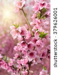 blossoming peach. branch with... | Shutterstock . vector #379626001