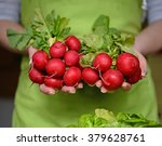 fresh organic radish in woman's ... | Shutterstock . vector #379628761