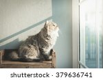 Beautiful Cat Looking Out...