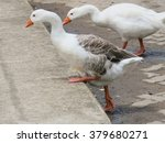 Small photo of Goose step