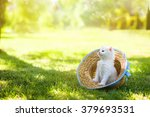 Stock photo little white kitten in a hat on the grass in sunny day 379693531