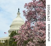 Washington Dc In Spring   The...