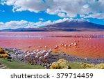 flamingoes in laguna colorada   ... | Shutterstock . vector #379714459