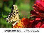 Tiger Butterfly On Red Flower