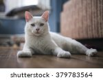Stock photo portrait of a year old male white cat 379783564