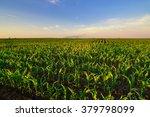 agricultural irrigation system... | Shutterstock . vector #379798099