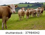 An Image Of A Young Herd Of...