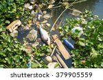 fish die due to water pollution ... | Shutterstock . vector #379905559