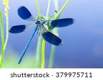 Blue Dragonfly On A Flower On...